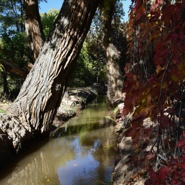 Acequia, Bosque Forest